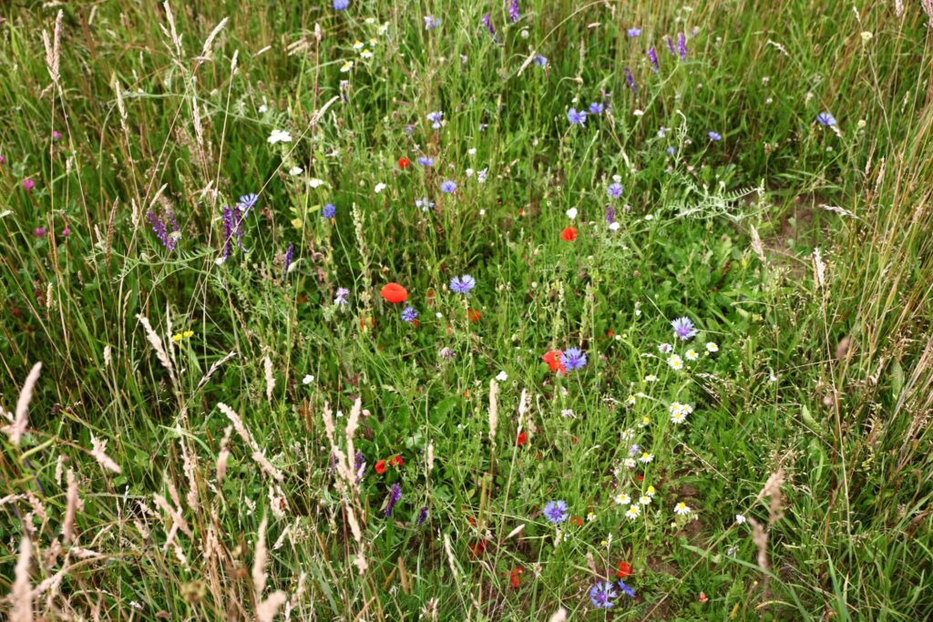 Seminar on wild flower meadows: nature in our street